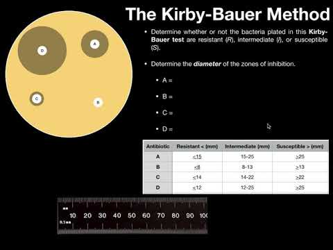 The Kirby-Bauer Method for Antibiotic Susceptibility (with examples)