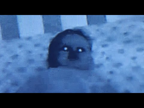 3 True Baby Monitor Horror Stories