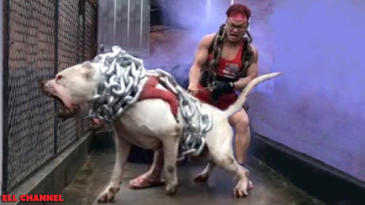 10 ყველაზე აგრესიული ძაღლი