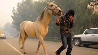Racehorses die in California fires