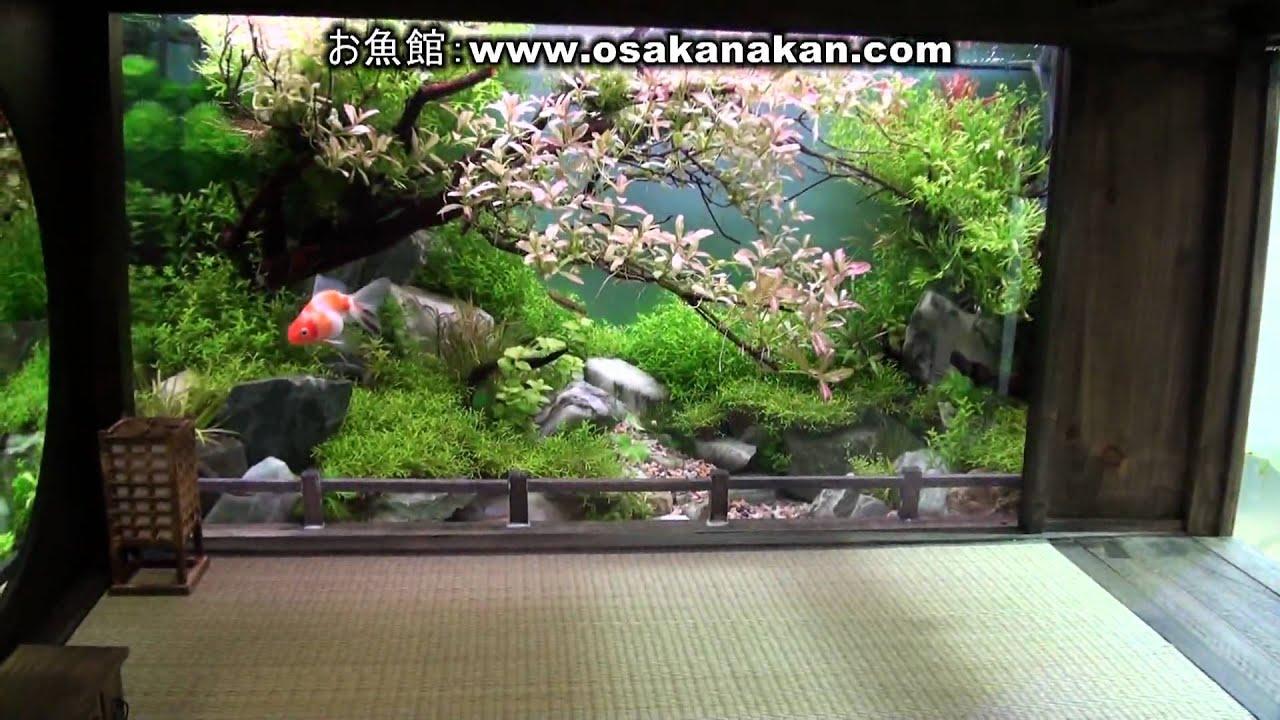 年日本観賞魚フェア 水槽ディスプレイコンテ …