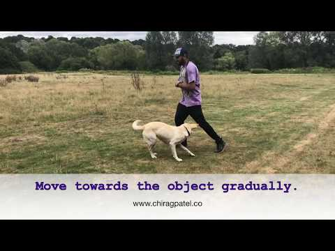 Great video for dogs and puppies