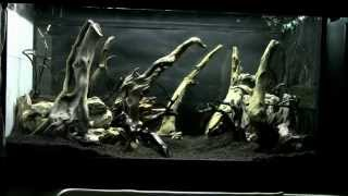 Fangorn Forest aquarium STEP by STEP