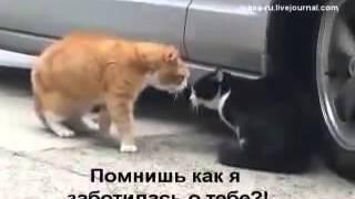Ржач Кошка арёт на кота