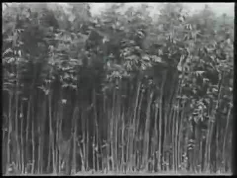 Видео сбор конопли заказать семена марихуаны цена