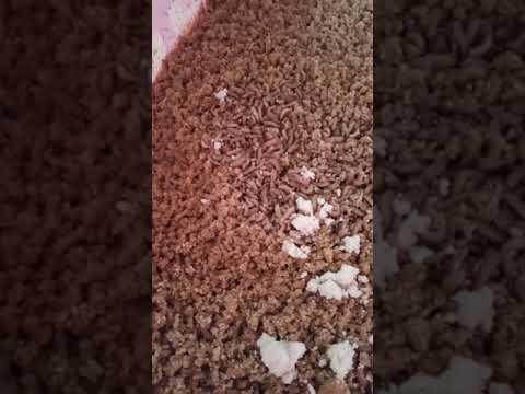 Sâu canxi - dinh dưỡng vàng cho vật nuôi - 0985454205