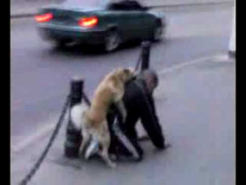 India : Dogs Mating from YouTube · Duration:  1 minutes 17 seconds