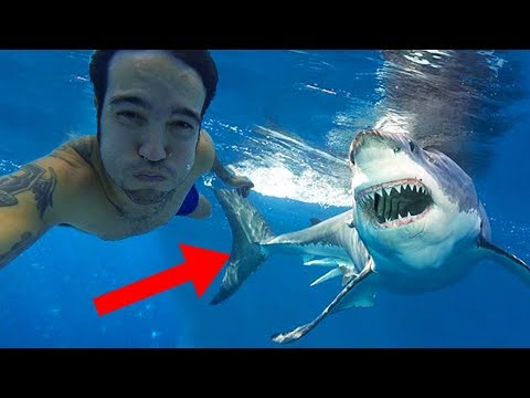 Why GREAT WHITE Sharks Are The BIGGEST Ocean Predators!