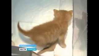 Котенок с шестью лапами в Казани