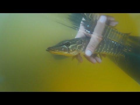 Рыбалка в мае на щуку и окуня | fishing for pike in Russia