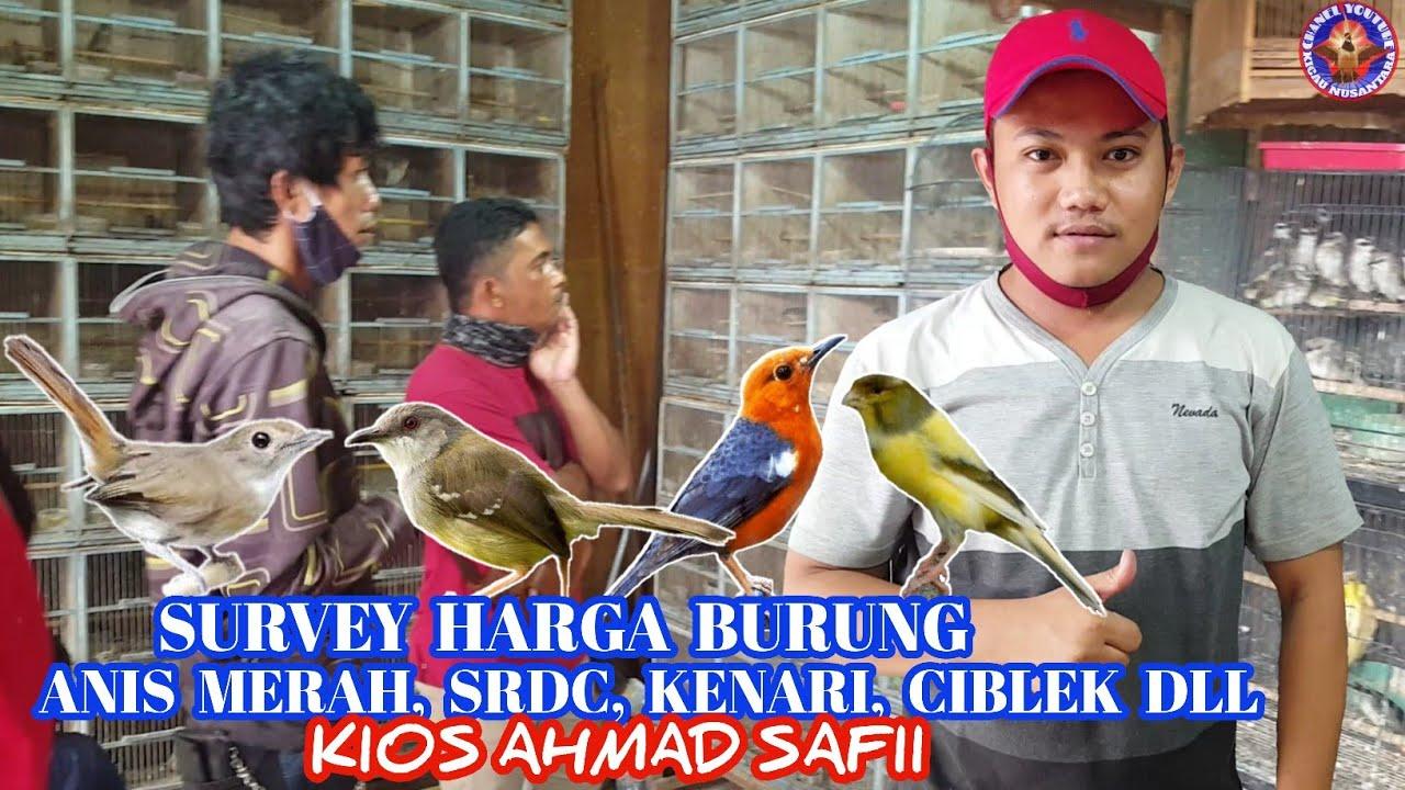 Survey Harga Burung Anis Merah Srdc Bali Kenari Dll Kios Ahmad Safii Youtube
