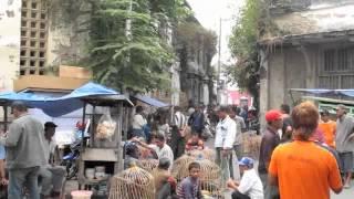 Cock-fighting in Old Semarang