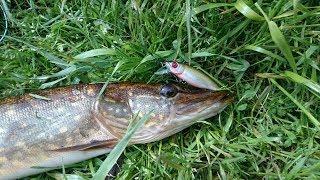 Не рыбалка, а сказка!!!!)