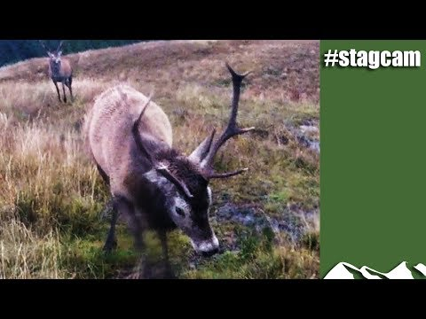 #stagcam---fight-sequence