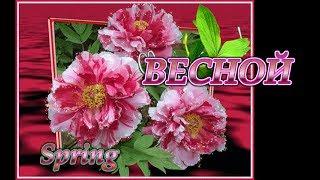 РОЗОВАЯ клумба-подборка 70 цветов.Flowers for pink gardenbed