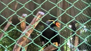 Dulahazra Safari Park Chittagong Coxs Bazar Bangladesh