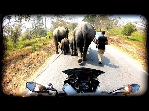 Riding Thru Tiger Country
