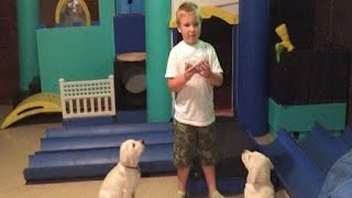 5 Year Old Training Two Labrador Puppies!!