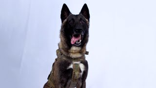 Who Is the Elite Army Dog That Cornered ISIS Leader?
