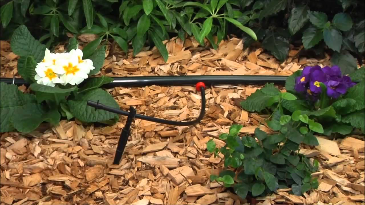 rain bird drip irrigation system - youtube