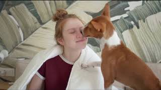 Basenji | Watch this before getting one