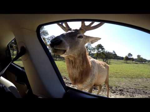 Fossil Rim Wildlife Center (4K) NTX Tesla Owners Group