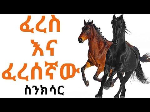 Ethiopia – Sheger FM – Sinkisar – Documentary – ፈረስ እና ፈረሰኛው – ስንክሳር