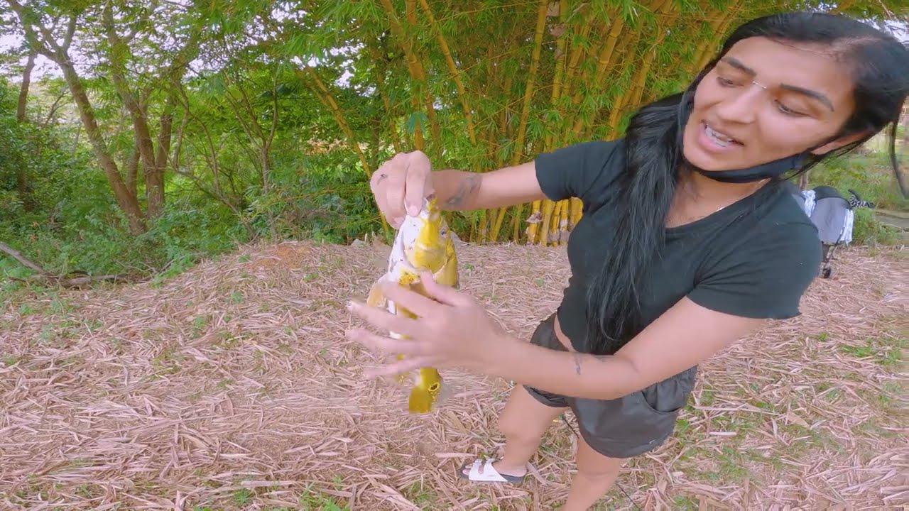 CHEFONA RAINHA DO TUCUNARÉ - Peixe Frito Num ilha no oceano Atlântico