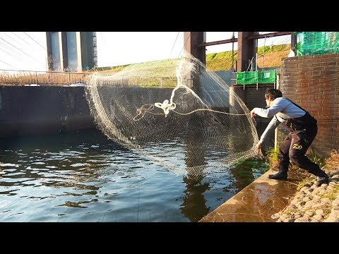魚が大量!「都会の温排水」にアミを入れたらすごかった!!!