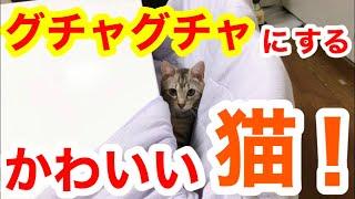 ねこ #かわいい #ベンガル 悪気もなく邪魔する令和のれい君です!笑 なぜ猫ちゃんは物の上に乗りたがるのか。 【ベンガル】【ノルウェージャ...