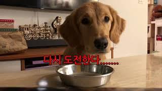 [골든리트리버VLOG]…