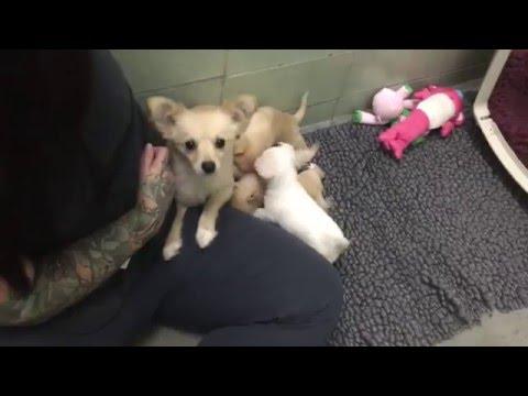 Трогательная встреча: собака и щенки встретились после расставания