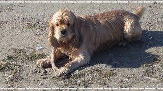 Собака море Анапа