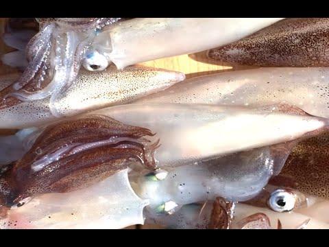 XEM CACH CAU CA MU How To Fish Calico Bass Spanish Mackerel Barracuda fish or more