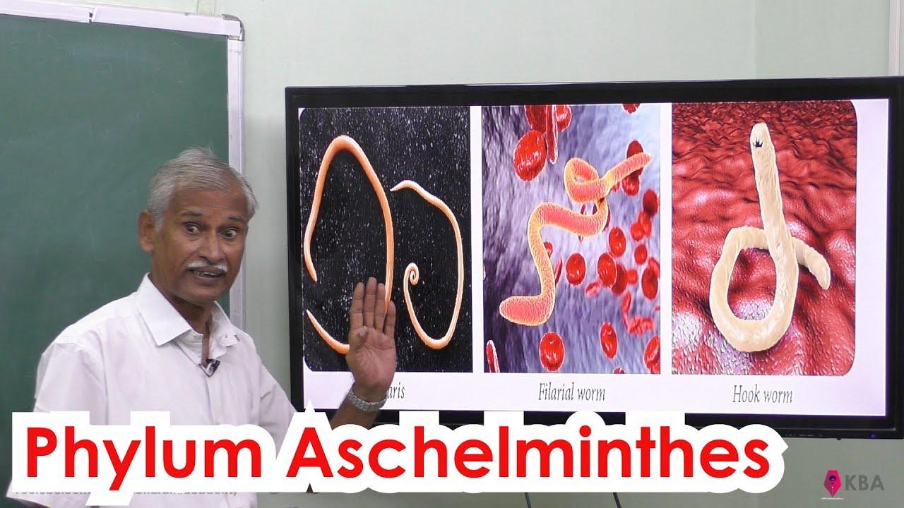 aschelminthes általános karakterek gyógyszer férgek gyermekek megelőzésére
