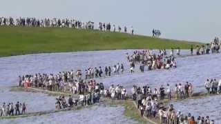 ネモフィラの丘/GWのひたち海浜公園 ネモフィラの丘 検索動画 2