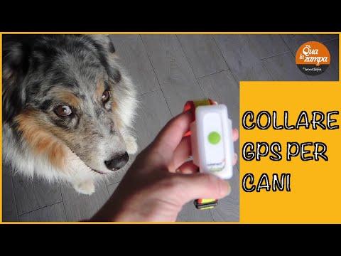 Collare GPS per cani Weenect: la nostra recensione | Qua la Zampa