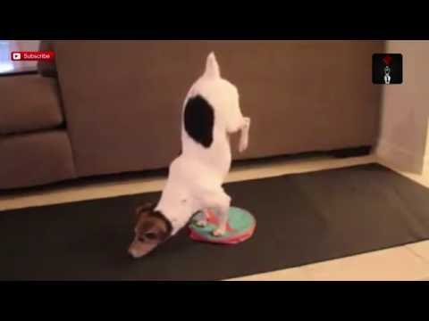 Yoga Dog Nails Exercise Routine And It's Amazing