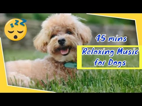 45-minutes-of-relaxing-music-for-dogs