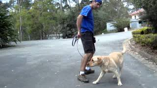 The Canine Classroom - Dog Training Session With Rastas
