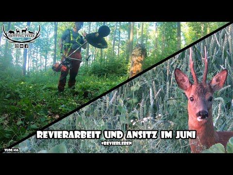 Download Revierarbeit und Ansitz im Juni / RevierLeben // Vlog 56