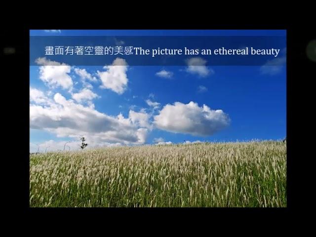 """茄萣濕地的芒種節氣之美The beauty of the """"Grain in Ear"""" solar terms in the Qieding Wetland"""