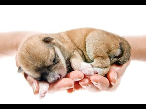 Cute Puppies Being Born