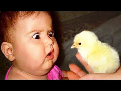 Funniest Baby Playing With Animals #2 - Funny Baby Actions