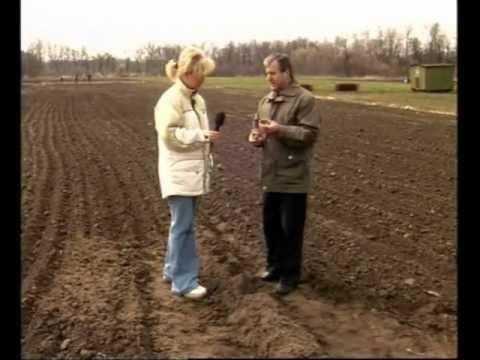 Живая земля подготовка картофеля к посадке