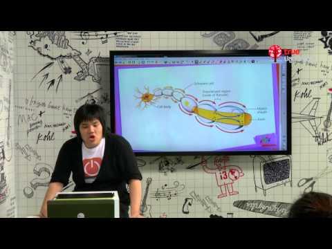 สอนศาสตร์ : PAT2 ชีวะ : ระบบประสาท