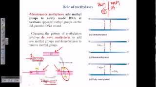 Types of DNA methylation