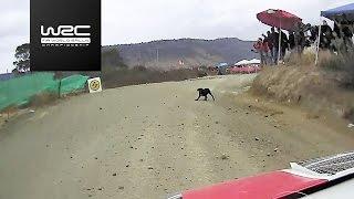 WRC - Rally Guanajuato México 2017: Best of Action