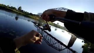 Рибалка на спінінг на річці З. Двіна.Воблерів стало менше)