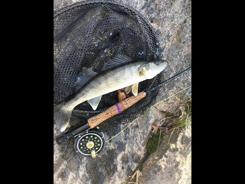 Walleye On The Fly! And JIGGING For Smallmouth Too!